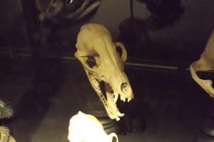 squelette animal préhistorique copie 2